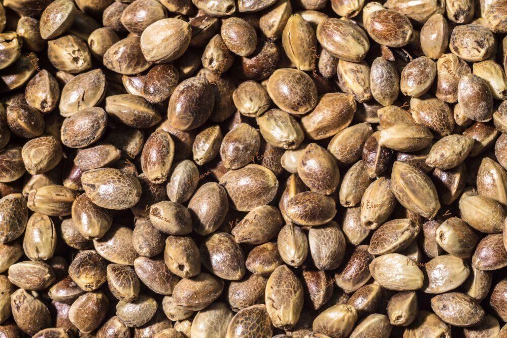 пищевые семена