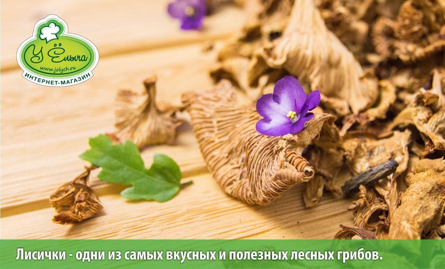 Лисички Ц один из самых полезных грибов средней полосы России